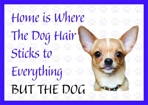 Home is Where The Dog Hair-Funny Chihuahua Vinyl Car Van Decal Sticker Pet