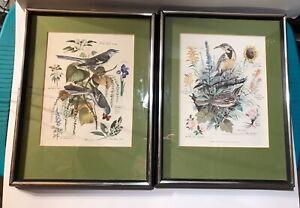 Arthur Singer Naturalist And Painter Of Birds Framed Prints Vintage