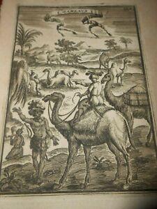 1683-COPPER-ENGRAVING-A-M-MALLET-CAMELS-039-Chameaux-039-Nubia-Sudan-Egypt
