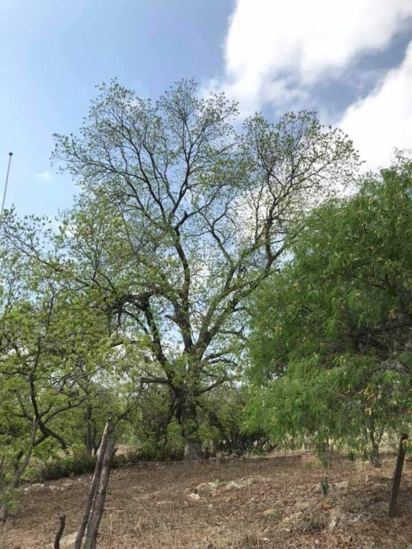 Venta Rancho en Ejido Pitahaya, Santo Domingo, por Sta. María del Río, SLP