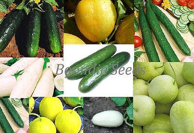 CUCUMBER 'Heirloom Mix' 15 seeds UNUSUAL vegetable garden mixture NON GMO easy