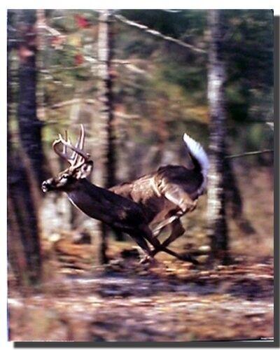 16x20 Whitetail Buck Deer Running Wild Animal Wall Decor Art Print Poster