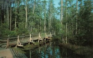 Postcard-Okefenokee-Swamp-Park-Waycross-Georgia