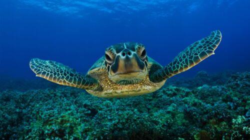 "Sea Turtle Crush Animals 42/"" x 24/"" LARGE WALL POSTER PRINT NEW."