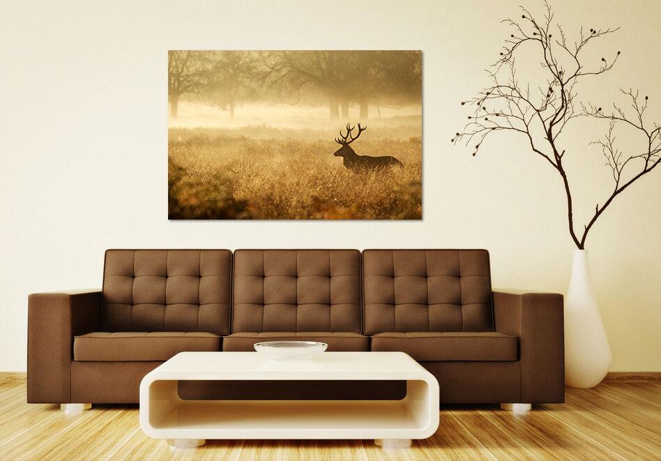 3D Der Himmel Rasen Hirsch 534 Fototapeten Wandbild BildTapete AJSTORE DE Lemon