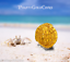 "thumbnail 7 - PERU 1708 8 ESCUDOS ""1715 FLEET"" 22kt SOLID GOLD DOUBLOON COB TREASURE COIN!"