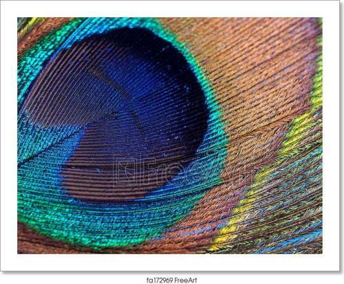 Wall Art Home Decor Peacock Feather Art//Canvas Print Poster