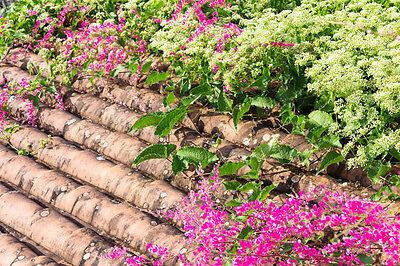 Sementi Piante Esotiche Giardino Semi Sementi Balcone Terrazzo Corallo Vino-mostra Il Titolo Originale Garantire Un Aspetto Simile Al Nuovo In Modo Indefinibile