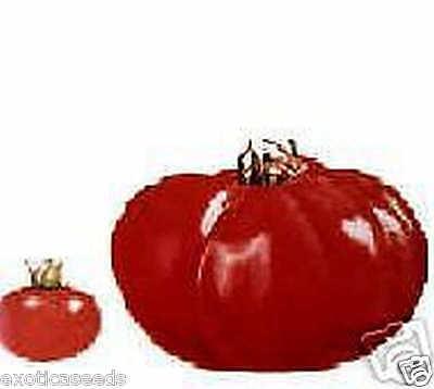 zeldzame VLEES TOMAAT Valencian Giant =1 kg  10 zaden