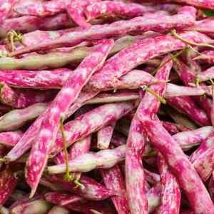 Pink Cranberry Bean Seeds USA Vegetable Borlotti String Green Taylor Seed 2021