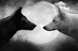 Framed-Print-Two-Wolves-Facing-Off-in-Front-of-a-Full-Moon-Picture-Wolf-Art