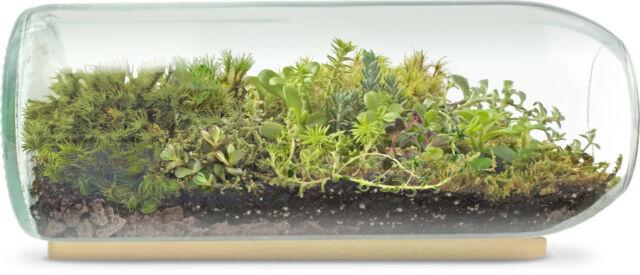 Potting Shed Large Terrarium Bottle Moss And Sedum For Sale Online
