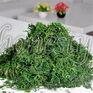 50g-Dried-Artificial-Reindeer-Moss-Plant-For-Flower-Hanging-Basket-Lining-Decor