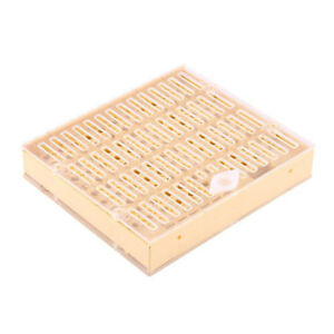 Scatola-box-allevamento-ape-regina-api-regine-plastica-strumento-apicoltura