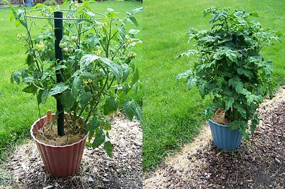 VEGETABLE TOMATO GARTENPERLE IDEAL FOR SMALL SPACES 60 SEEDS **FREE UK P&P**