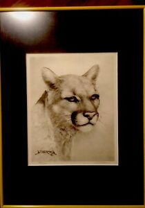 Framed-Matted-Cougar-Drawing