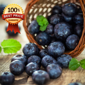 100Pcs Blueberry Tree Seed Fruit Blueberry Seed Potted Bonsai Seeds Plant HOT**