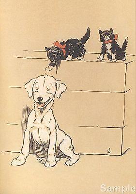 Cecil Aldin The White Puppy 1909 Art Repro Photo Print Picture No.1