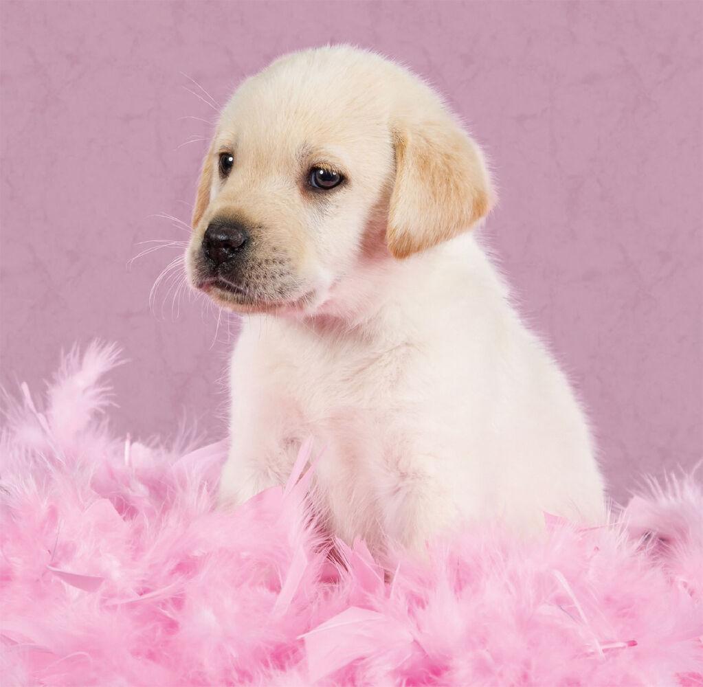 Birthday Card Yellow Labrador Puppy Dog Pretty In Pink