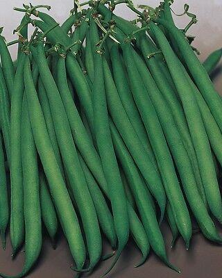 Vegetable - Dwarf French Bean - Safari - 100 Seeds