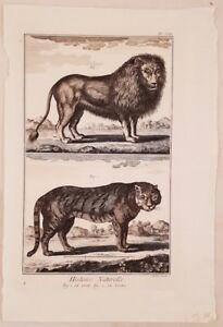 LEONE-TIGRE-LION-TIGER-ZOOLOGIA-ZOOLOGY-MAMMIFERI-ANTONIO-BARATTI-1770