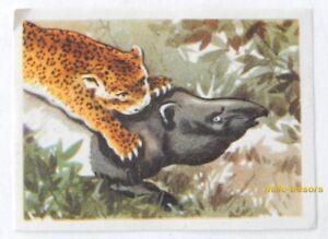Image CHROMO Chocolat MARTOUGIN N°E2 pour Album Chasseurs de Fauves