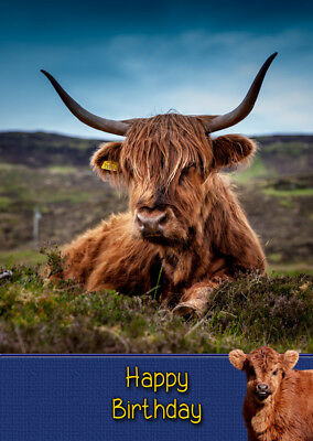 Highland Cow Birthday Card Free Delivery Ebay