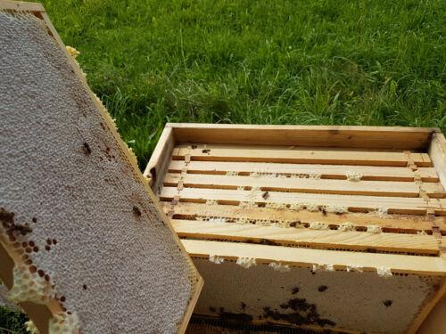 2,5 kg Mittelwände Zandermaß 395 x 195 mm Bienenwachs Mittelwände ca 32 Stück