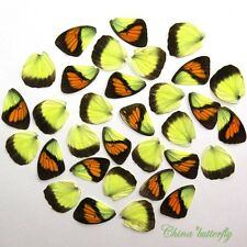 32 pcs REAL BUTTERFLY wing jewelry butterfly material ooak fairy DIY artwork  #1