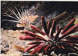 Oursin-Cidaris-Rochelle-Aquarium-Postcard-unused-VGC