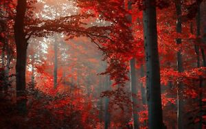 STUNNING-AUTUMN-WOODLAND-CANVAS-PICTURE-POSTER-PRINT-WALL-ART-UNFRAMED-1034