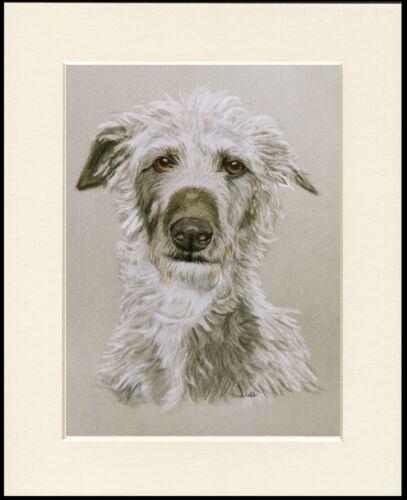 SCOTTISH DEERHOUND HEAD STUDY LOVELY DOG ART PRINT MOUNTED READY TO FRAME