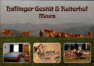 HAFLINGER-Gestuet-in-MEURA-Mehrbild-AK-Pferde-Horse-Horses-Postcard-Hotel-AK