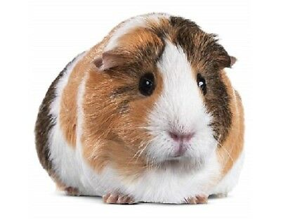 DOG RABBIT CAT up to 20/% OFF!!! GUINEA PIG Mrs Grossman/'s Sticker PETS