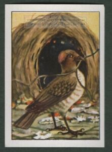 Spotted Bower Bird Of Paradise New Guinea Pacific Vintage Ad Card/Stamp