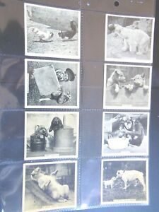 1935-OUR-FAVORITES-dogs-cats-birds-Godfrey-Phillips-Tobacco-Card-Set-48-cards