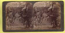 Stereoscopic Card - Banana Plantation, Hawaiian Islands - Underwood & Underwood