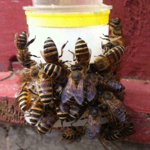 Plastic Bee Feeder Water Drinking Fountain Jar Beekeeper A9H5 2020 Tool P7C4