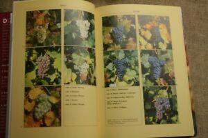 Fachbuch-Weinbau-Rebsorten-Botanik-Anbau-Weinkompendium-Winzer-1998