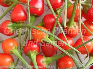 TEPIN-Chili-Birdpepper-Wildform-10-frische-Samen-Balkon-Kuebel