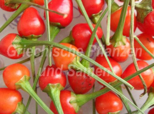 ️ Tepin Chili Bird Pepper Wildform 10 Graines Frais Balcon Seau