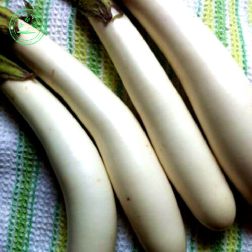 700PCs Seeds Eggplant Heirloom Moon White Long  Vegetables Chinese Home Garden