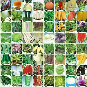 100-Vare-Chinese-Vegetable-Seeds-garden-Colorful-retail-package