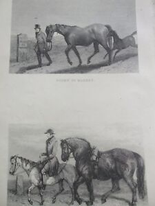 ANTIQUE-PRINT-C1800-039-S-ENGRAVING-GOING-TO-MARKET-TRAVELLING-CART-STALLION-HORSES