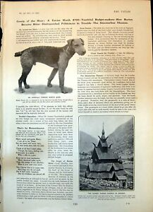 Old Print Airedale Terrier est Parish Church Norway Mr C B Fry Age 18 19 19th