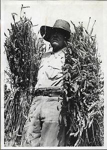 PHOTO PRESSE LAPI Juillet 1943 AGRICULTURE Un Paysan