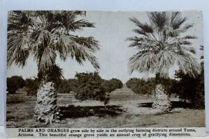 Arizona-AZ-Yuma-Palms-Oranges-Postcard-Old-Vintage-Card-View-Standard-Souvenir