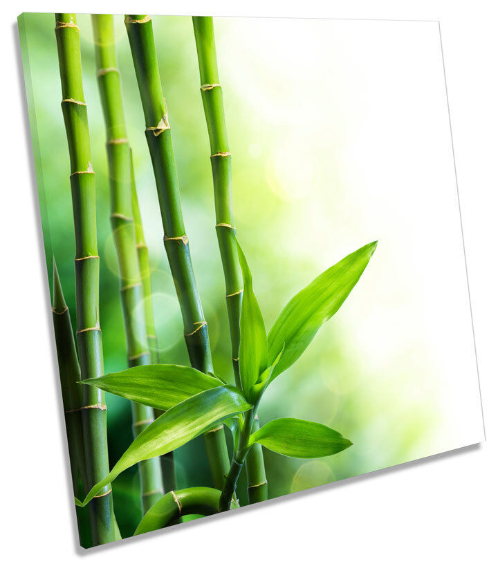 Bamboo Floral  SQUARE BOX FRAMED CANVAS ART Picture