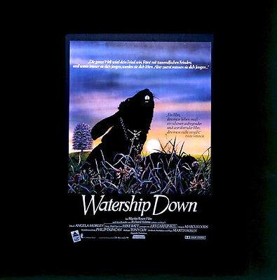 Watership Down ORIGINAL Kino-Dia / Film-Dia / Diacolor / Martin Rosen