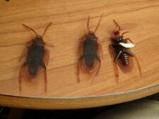 3 cockroach and a maggot Joke Prank Plastic Rubber Gag Trick fake insect